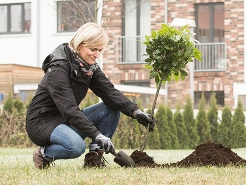 Conny macht was Vernünftiges und pflanzt einen Baum für die Zukunft
