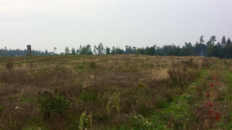 Der fünfte Klimwald entsteht in Malchow