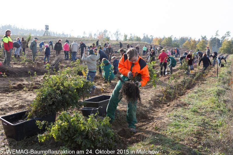 Impressionen der WEMAG Baumpflanzaktion in Malchow