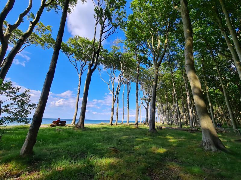 Bäume, Sonne und die Ostsee - saubere Luft - CO2 Ausgleich