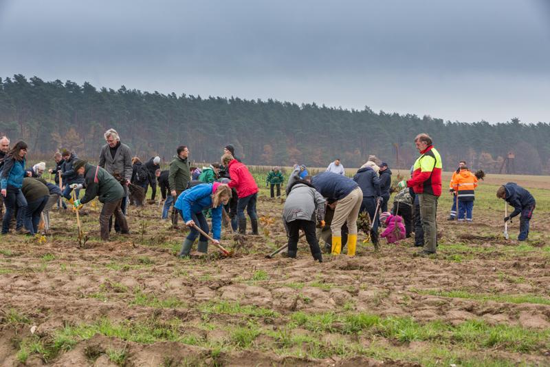 WEMAG Baumpflanzaktion 2019 in der Nähe von Malchow
