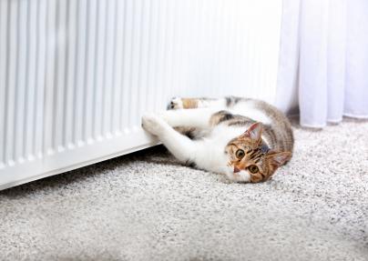 Katze wärmt sich an Heizung