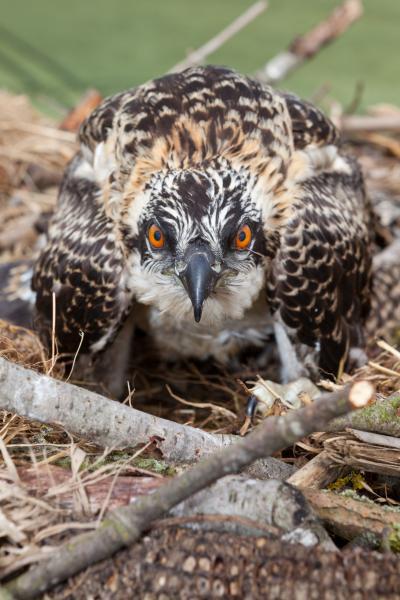 Vogelschutz WEMAG